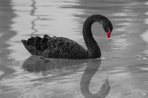 How a Black Swan Event Validates Digital Transformation Initiatives