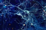 Accelerating Brain Mapping with AI and HPC
