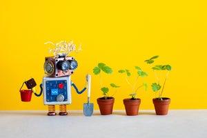 AI brain gardening, why pruning can yield sweeter fruit